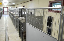 Interior of Dog Kennels